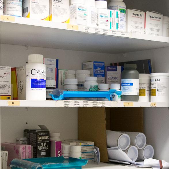 Vet Medicines & Diets
