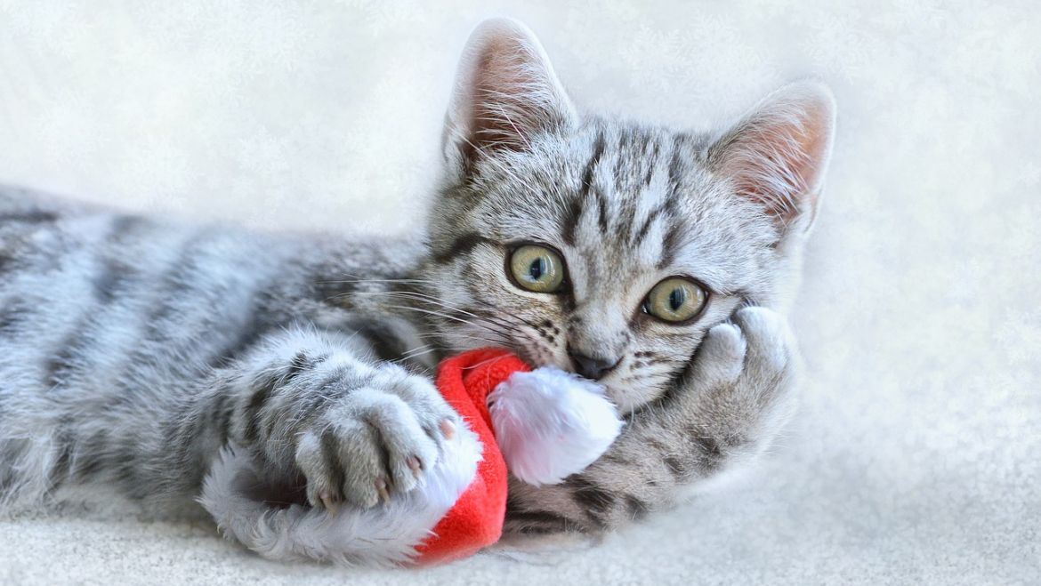 Christmas At The Loft Cattery